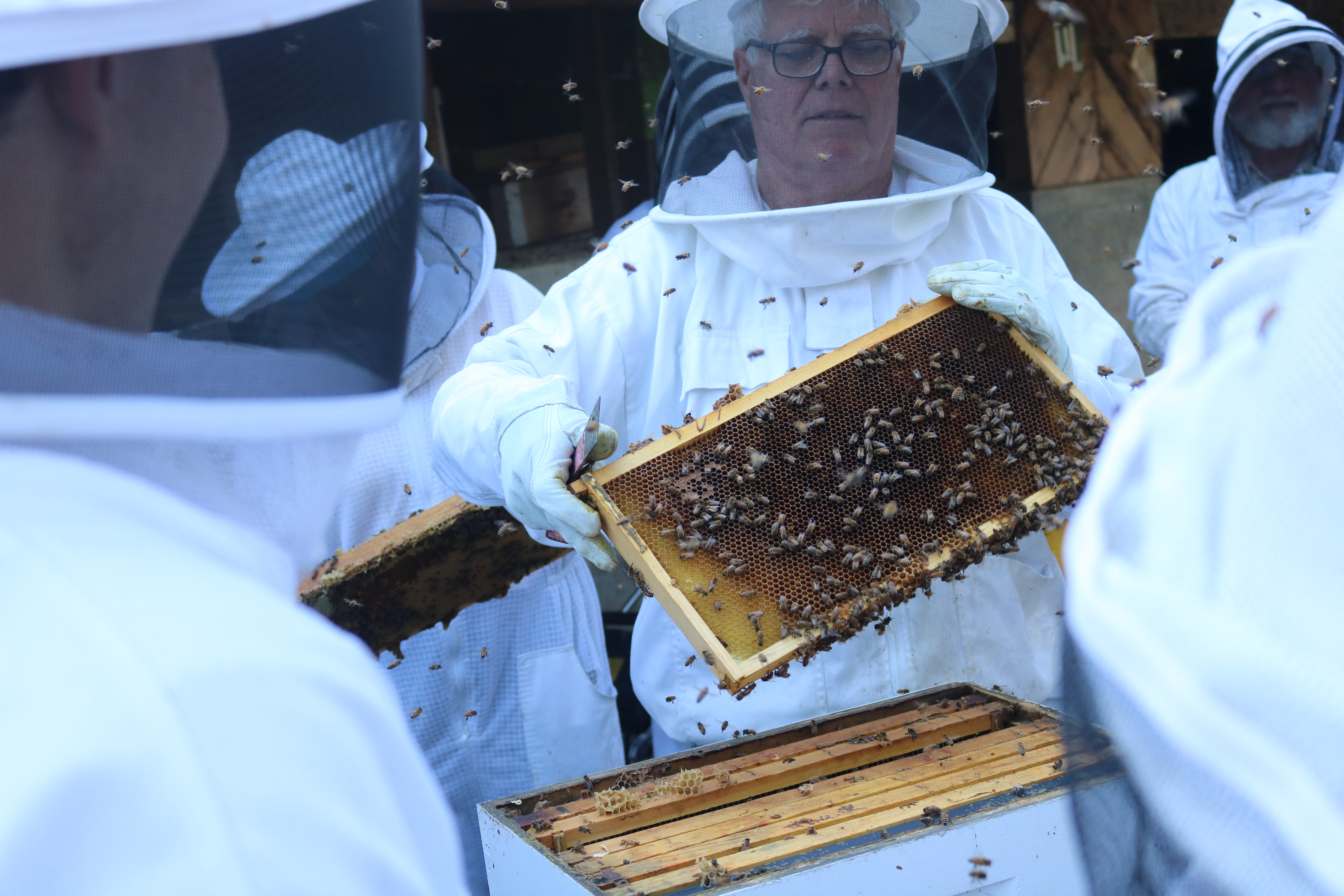 Beekeepers buzzing with the bees.
