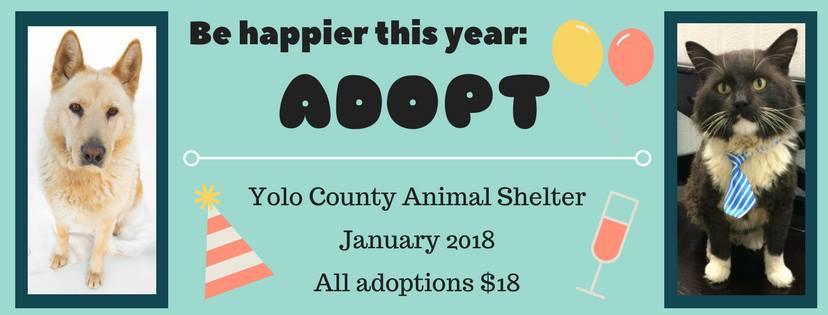 18 adoption promo 2